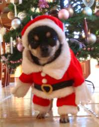 Shiba Inu Christmas Ornament 2018 New Standing Christmas Puppy Cute Clothes Santa Claus