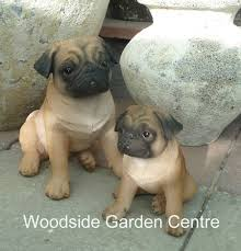 resin real pug garden ornament woodside garden centre