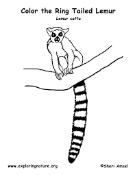 ringtailed lemur coloring page coloring page for kids kids coloring