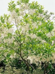 25 trending tree with white flowers ideas on white