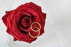 red rose rings images Wedding rings rose gold free photo on pixabay jpg