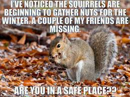 Squirrel Nuts Meme - funny squirrel nut quotes card sayings pinterest