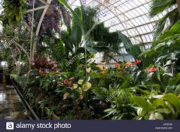 tropical plants in the glass house christchurch botanic gardens
