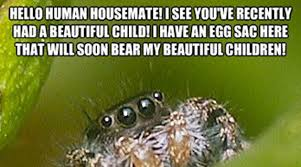 Spider Meme Misunderstood Spider Meme - misunderstood spider meme