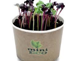 indoor seeds etsy