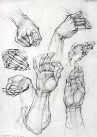 academic drawing anatomy u0026 boby arts pinterest drawings
