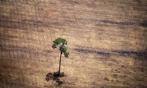 native plants in the amazon rainforest these shocking photos of the disappearing amazon rainforest are a