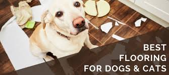 Best Flooring For Pets 6 Best Pet Friendly Flooring Options For Your Dogs Cats Floor