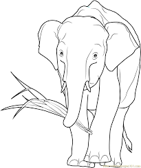african elephant eating coloring free elephant coloring