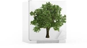 small oak tree isolated wall mural pixers we live to change