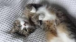Por que os gatos sobrevivem a quedas de grandes alturas?