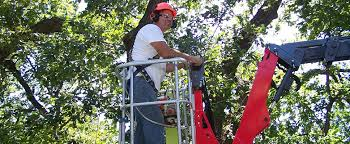 torpy tree service quality tree care landscape services to the