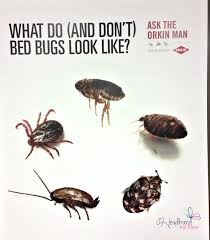 Dont Let The Bed Bugs Bite What Are Bed Bugs Vnproweb Decoration