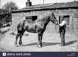 victorian farm hand standing with a large horse outside an old