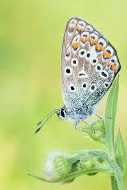 best 25 butterfly pictures ideas on pinterest beautiful