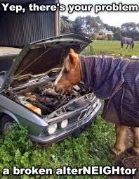 Broken Car Meme - 30 funny animal captions part 26 30 pics amazing creatures