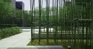 mikyoung kim design bamboo garden lg headquartersmikyoung kim