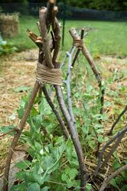 build a plant teepee with sticks for those vines to grow on too