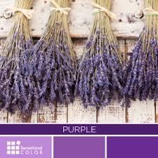 purple color meaning color purple psychology symbolism meaning sensational color