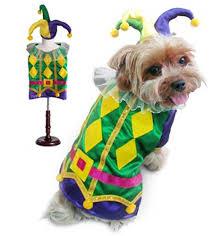mardi gras dog harlequin mardi gras dog costume