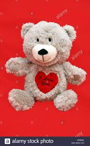valentines day teddy valentines day teddy with a heart saying i you stock