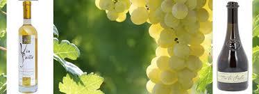 La Suite Dans Le Vignoble Du Jura Proche Vin De Paille Contre Vin Paillé Pourquoi La Corrèze Est Sous Le
