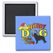belgian sheepdog agility dog agility refrigerator magnets zazzle