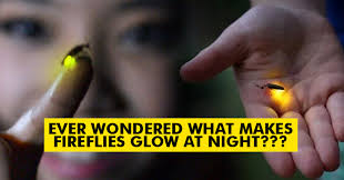 How Do Fireflies Light Up Ever Wondered Why Fireflies Glow During Summer Nights Here U0027s The