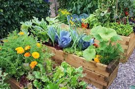 Herb Garden Layout Ideas Garden Layout Ideas