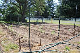 now our garden can grow on the banks of salt creek