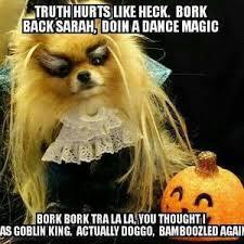 Pomeranian Meme - dog memes replacing political posts the mcfarland thistle columns