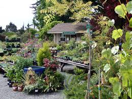 ca native plant nursery nursery on the plaza visit mcbg inc 2017 fort bragg california