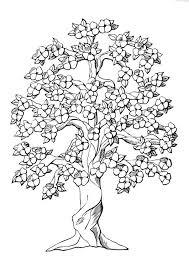 Coloriage arbre et la floraison  img 9980