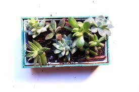 succulents a reprise wooden magnetic and miniature succulent