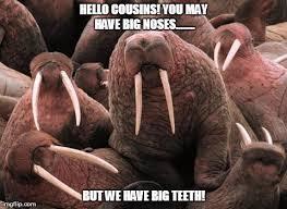 Walrus Meme - index of wp content uploads 2013 07