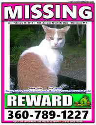 Missing Cat Meme - missing cat stevenson wa lost found pets wa state