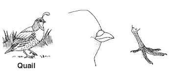 bird adaptations biology junction