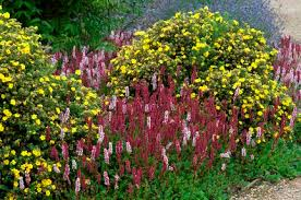 Garden Shrubs Ideas Shrubs Smaller For Year Interest Rhs Gardening
