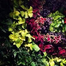 Vertical Gardens Miami - www lapetitefleurmiami com la petite fleur miami pinterest