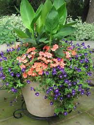 container flower gardening gardening ideas