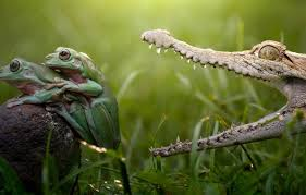 wallpaper colorful reptile teeth danger hunt colourfull legs