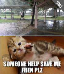Rainy Day Meme - oh no cat gets stuck on tree on rainy day