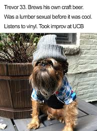 Hipster Dog Meme - 10 dog bios that will hilariously remind you of somebody you know