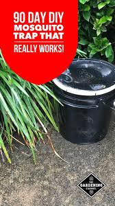 diy mosquito trap with a 3 or 5 gallon bucket mosquito control