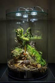 biorb vivarium terrarium aquarium pinterest vivarium