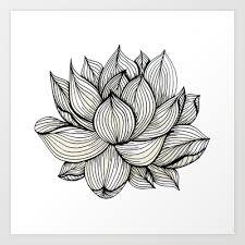 Flower Drawings Black And White - lotus flower black and white nature organic design drawing