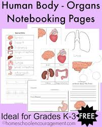 free human body organs worksheets and notebooking pages free