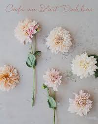 wedding flowers guide seasonal flower guide summer dahlia cafes and flowers