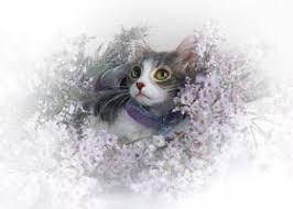 victorian cat feline fantasy greeting cards fairy cat kitten