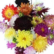 fresh cut flowers fresh cut dahlias
